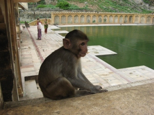 temple singes 09
