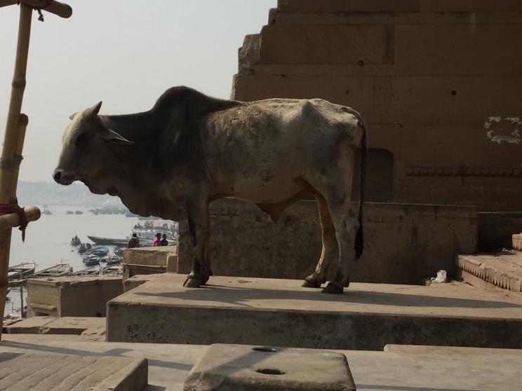Varanasi 05 fev-69