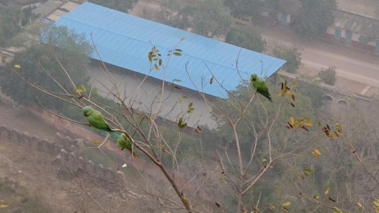 Gwalior 13 fev-26